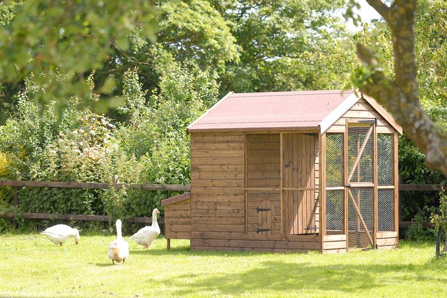 Harrier hen house - image 2