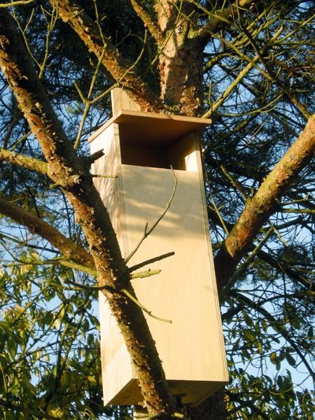 Owl box - image 3